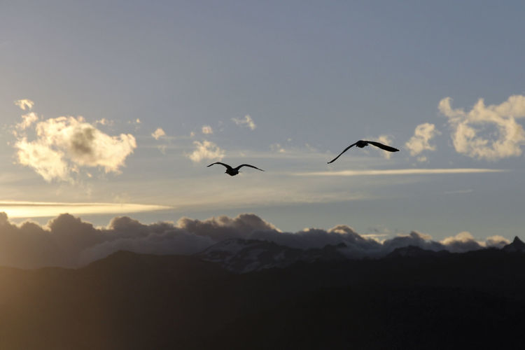 Animal Themes Animal Wildlife Animals In The Wild Beauty In Nature Bird Cloud - Sky Day Flying Mid-air Mountain Nature No People Outdoors Scenics Silhouette Sky Spread Wings Sunset Tranquil Scene Tranquility