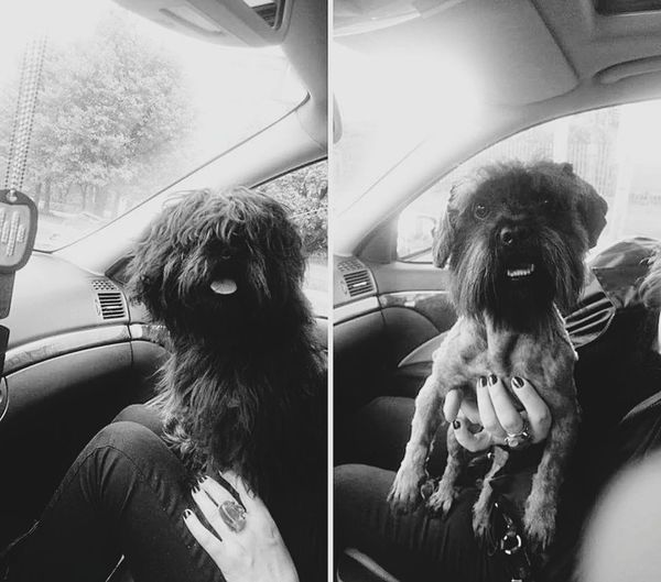Same dawg different day Passenger Seat Dogslife HairCute Extreme Changes Changes Is This Me? I Can See You Puppy Cute Dog