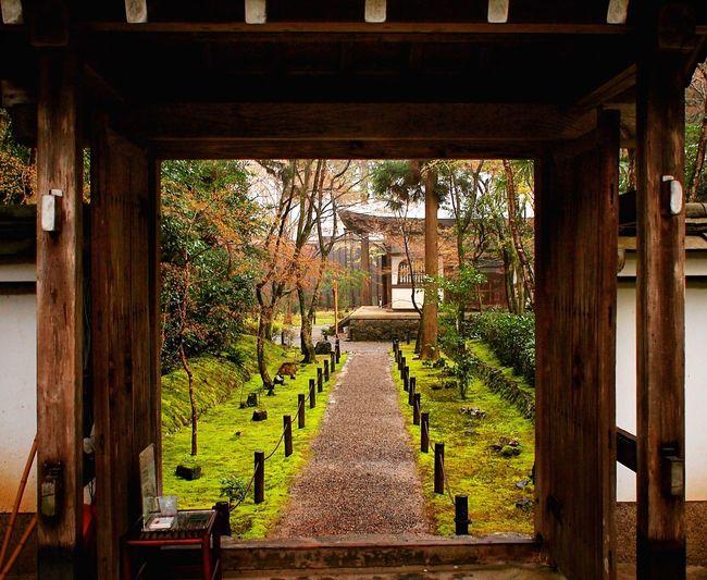 竹の寺地蔵院 地蔵院 京都 Kyoto Kyoto, Japan Kyoto Garden Japanese Garden 3XSPUnity Travel Destinations Relaxing Enjoying Life Hello World Beauty In Nature