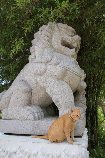 Kosamui Thailand One Animal Mammal Outdoors No People Day Animal Themes Nature