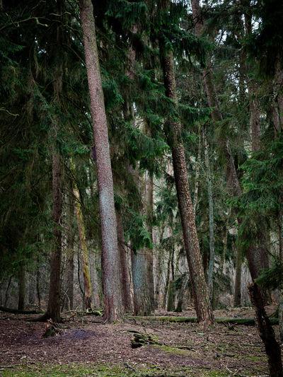 Hamburg Tree