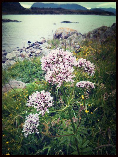 Flower by the Coast