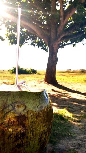 Relaxing Natureza Aguadecoco Sombraeaguafresca Manhadesol