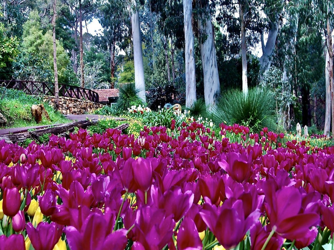 PINK FLOWERING PLANTS IN PARK