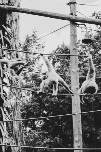 View of monkey on fence