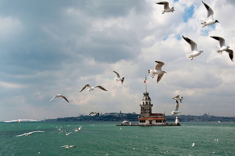 Capture The Moment Maidenstower Istanbul Turkey Birds