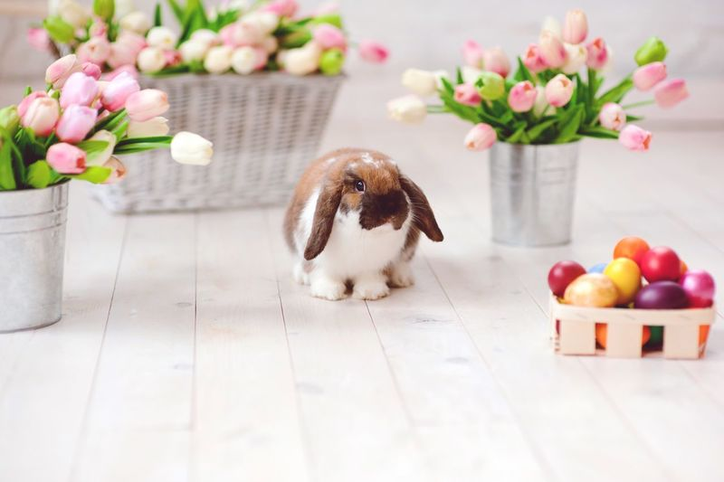 Rabbit Sitting By Tulips In Container