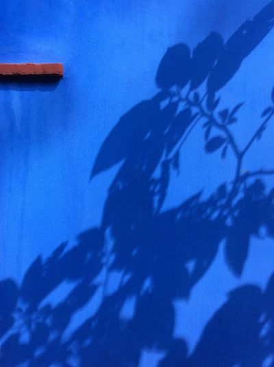 Mexican blue wall Foliage Shadows red brick window sill Frida Kahlo Museum garden Shadow Silhouette No People Mexico City Nov iPad photography EyeEm Best Shots I Pad Mini Autumn Nature Outdoors