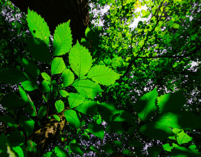 Forestwalk EyeEm Best Shots EyeEm Nature Lover EyeEmNewHere WoodLand Backgrounds Beauty In Nature Close-up Day Foliage Forest Freshness Full Frame Green Color Growth Leaf Leaves Lush Foliage Nature No People Outdoors Plant Plant Part Selective Focus Tranquility Tree Be Brave
