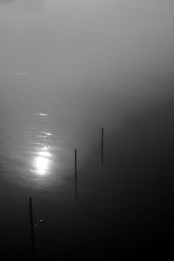 Posts in a Foggy River Water Reflection Tranquility No People Tranquil Scene Waterfront Beauty In Nature Scenics - Nature High Angle View Idyllic Post Fog Silence Blackandwhite Black And White