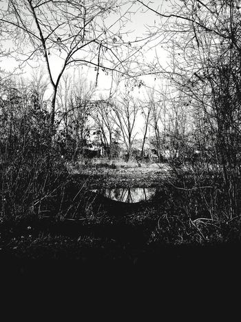 Tree Water River Tidone Winter Blackandwhite EyeEmNewHere Eyem Nature Lovers  Eyemphoto Pianello Val Tidone Piacenza, Italy No People Day Indoors  Close-up Ink
