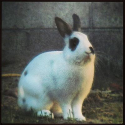 I don't have a rabbit!! Where did this adorable rabbit come from?!?!?! Its in my backyard! What?? ('0')