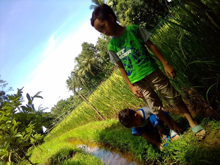 My kids Boys Farmlife Padi Carita Banten Pematang Sawah Sky Skies Lite Life Lifestyle Green Green Color Green Growth Child Water Rice Paddy Rice Field