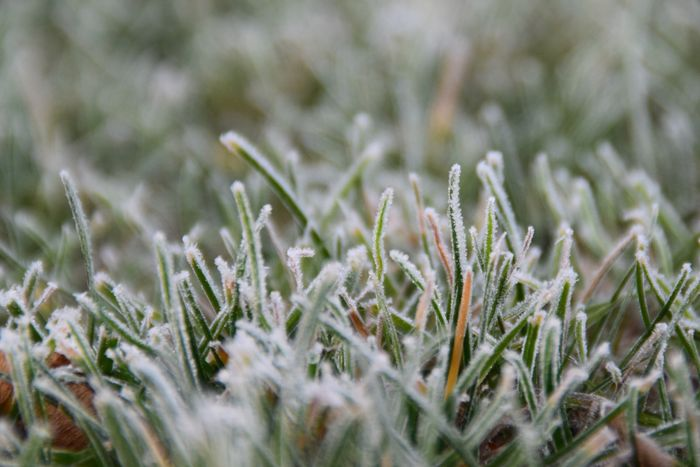 Nature Selective Focus Close-up Beauty In Nature Grass Full Frame Backgrounds Winter Frost Frosty Grass Cold Cold Temperature Freezing Winter Tones in Köln Germany Shades Of Winter