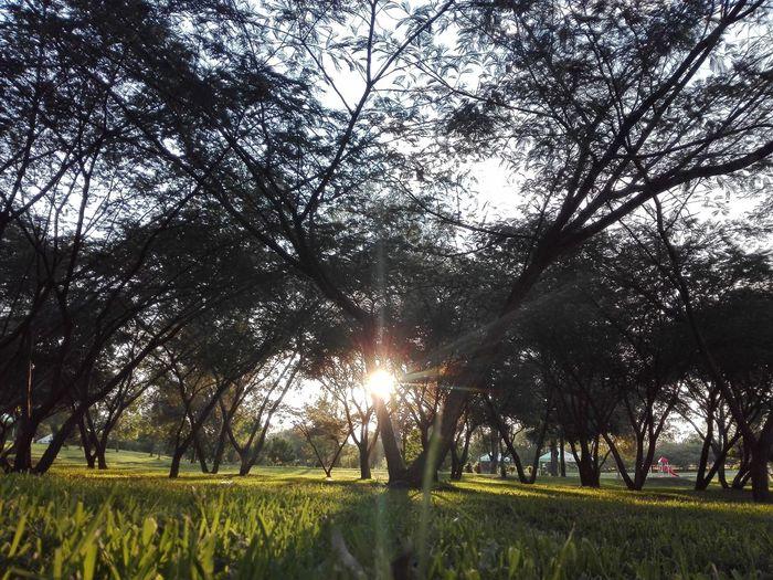 Una tarde charlando Parque Metropolitano Self Perspective Charlas Sunlight Landscape