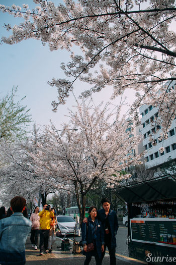 Cherry Cherryblossoms Koreans, Streetlife Streetphotography Up Close Street Photography Wanderlust Yeouido Yeouido Hangang Park