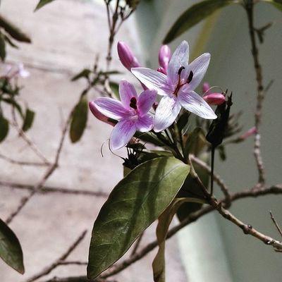 Flower Flowers Ontheroad Travel Beautiful Takeapicture