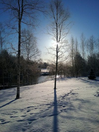 Nature On Your Doorstep Enjoying The Sun Sunny Morning Frozy Nature Photography Light And Shadow Birch Snowy Landscape Scenery Finland River View Kymijoki Calm Water Prints In The Snow