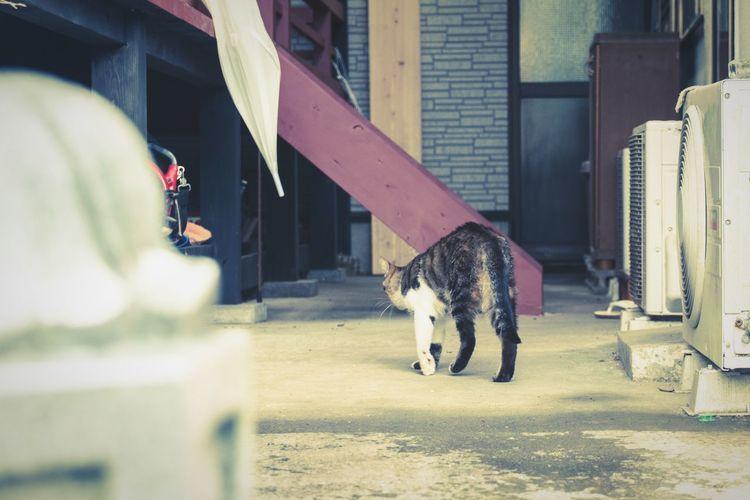 Cat Untold Stories Walk This Way Deceptively Simple Walking Around Animal Pastel Super Retro Mild Days No People