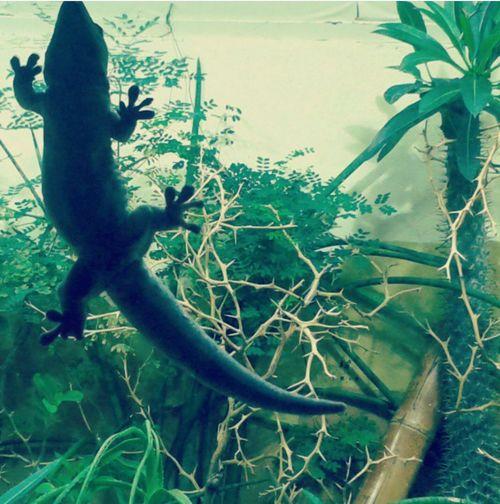 Animal Themes Nature Reptile Geco Bioparco Roma