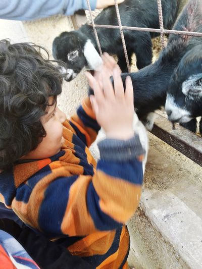 High angle view of boy holding kid goat