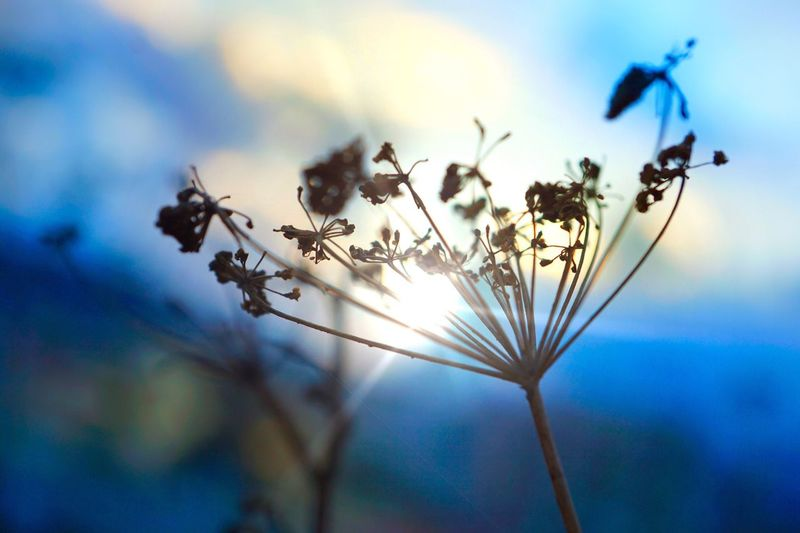 Nature Focus On Foreground Close-up No People Plant Growth Animal Themes Sky Outdoors Day Beauty In Nature Fragility Animals In The Wild Freshness Flower Plant Sun Light Sunset Sky Blue Beautiful Nature Beautiful Love