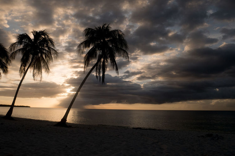 Cuba Beach Beauty In Nature Cloud - Sky Day Horizon Over Water Maria La Gorda Nature No People Outdoors Palm Tree Scenics Sea Silhouette Sky Storm Cloud Sunset Tranquil Scene Tranquility Tree Water