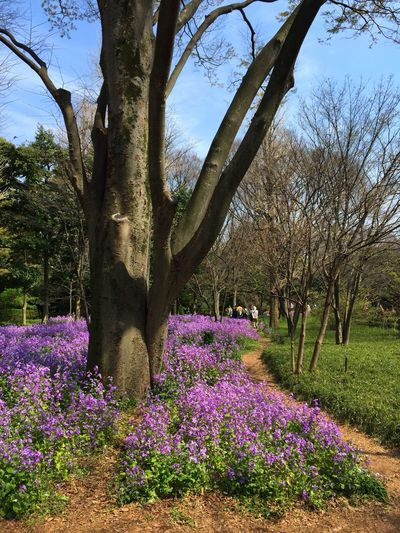 Purple meadow. Purple Flower Nature Nature Spring Check This Out Tadaa Community Traveling Japan Flowers Meadow