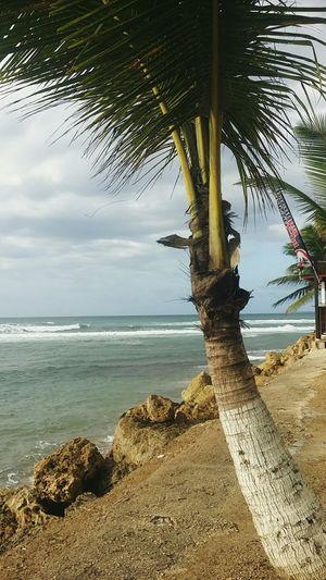 Islatropical Playa Puertorico Playa Pico De Piedra