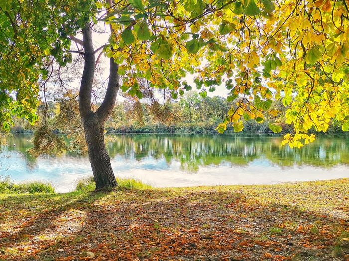 Trees by lake in park during autumn