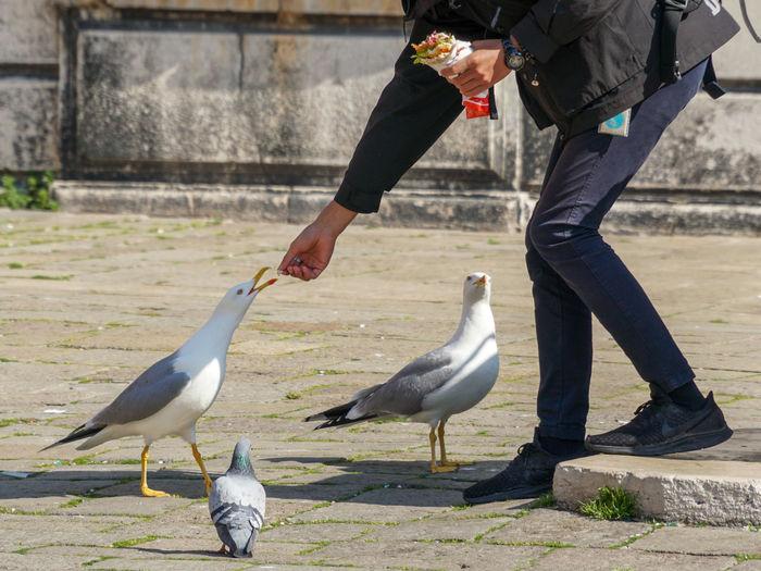 Hungry Sharing