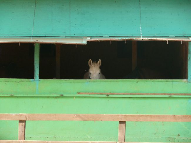 Showcase April Horses Horse Horse Photography  In The Barn Lonely Loneliness Looking At Camera Posing For The Camera Shy Animals Animal Themes Animal_collection Nature's Diversities