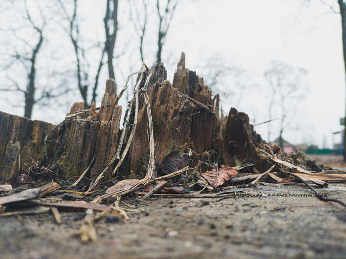 Close-up of driftwood in forest