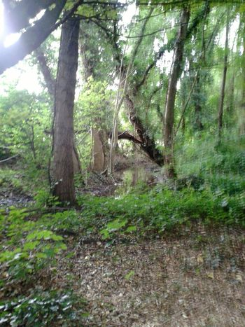 Ich Liebe Bäume! ♥ Waldspaziergang A Walk In The Woods The Places ı've Been Today EyeEm Nature Lover Unterwegsunddraußen