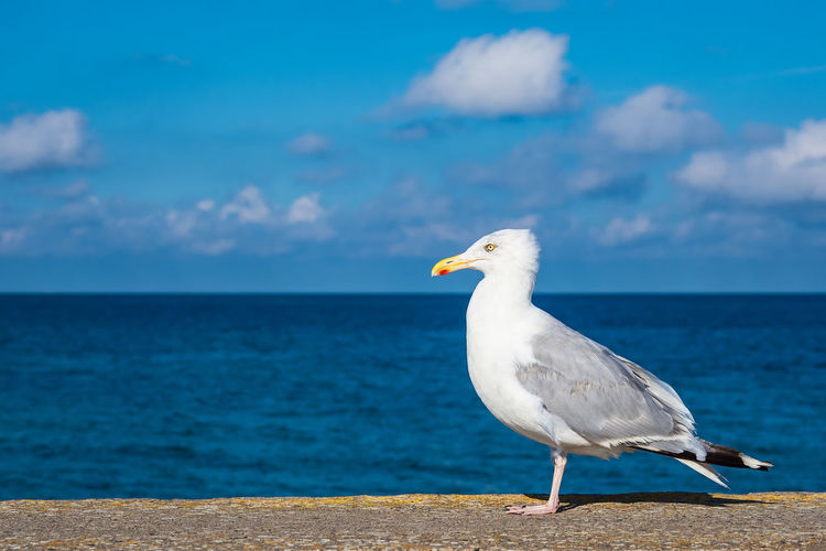 Seagull On Railing With Sea In Background Against Blue Sky