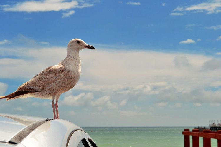 Bird perching on car against sky