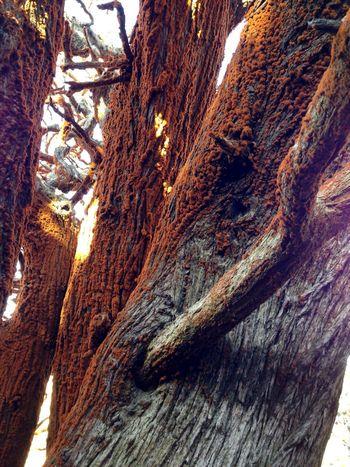 Point Lobos Mossporn