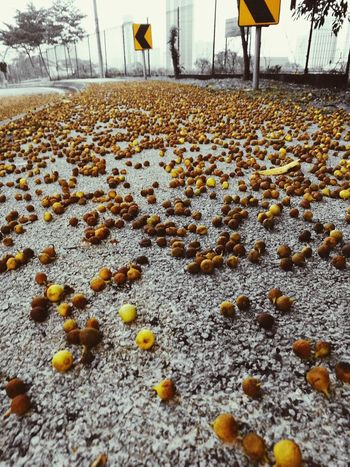 morning freshness relax energizing Yellow Winter Snow Close-up Fallen Leaves Fall Dried FootPrint Pebble Beach