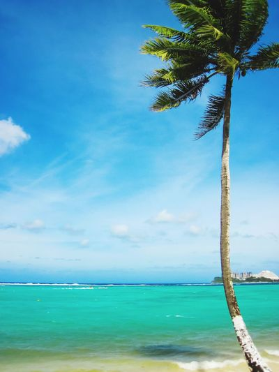 Tropical vacation Room For Text Copy Space Copy Space Water Sea Sky Plant Beauty In Nature Beach Tree Land Horizon Over Water Horizon Tranquil Scene Scenics - Nature Tropical Climate Nature Tranquility Blue Cloud - Sky Palm Tree