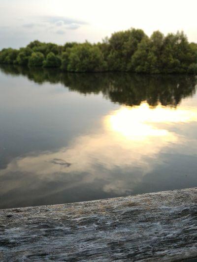 Sunset at The Lake Lake Mangrove Sunset Wood Nature