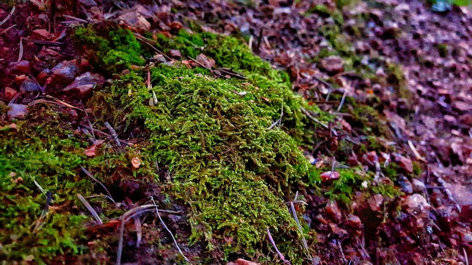 Rocky Mountain moss. Green Moss Green Color Beauty In Nature Greatday Extreme Close-up Followme Followplease Follow4follow Plant Epic Shot Photography Rocky Mountains Nature Outdoors Close-up Photos Around You Greatview Off The Beaten Path