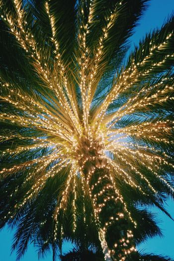 Low Angle View Exploding Arts Culture And Entertainment Sky Tree Outdoors Celebration No People Full Frame Multi Colored Night Illuminated Clear Sky Cayman Islands Georgetown Palm Trees Christmas Tree Christmas Decoration