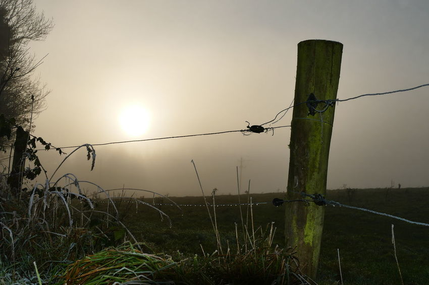Foggy day.. Beauty In Nature Day Dream States Ethereal Fence Fog Foggy Foggy Weather Grass Landscape Nature No People Outdoors Silhouette Silhouette Silhouette_collection Sky Softness Sunset Tree