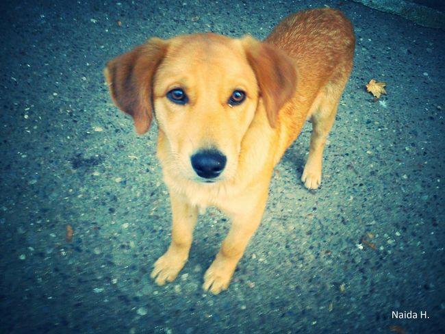 Hi! Animals Dog