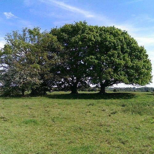 Dedham Essex Walk Riverstowe spring nature tree entrees green nofilters