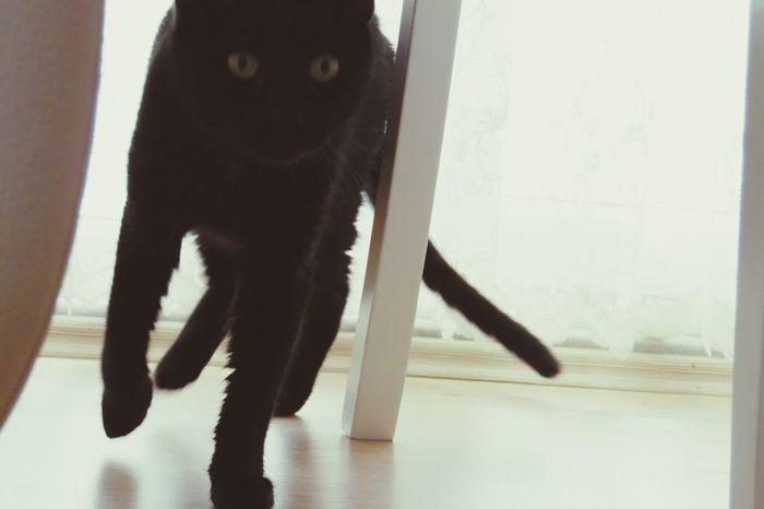 Pet Love Cat♡ Cats Kedi Aşkı Kediler kedi candir gerisi heyecandir ;) Enjoying Life