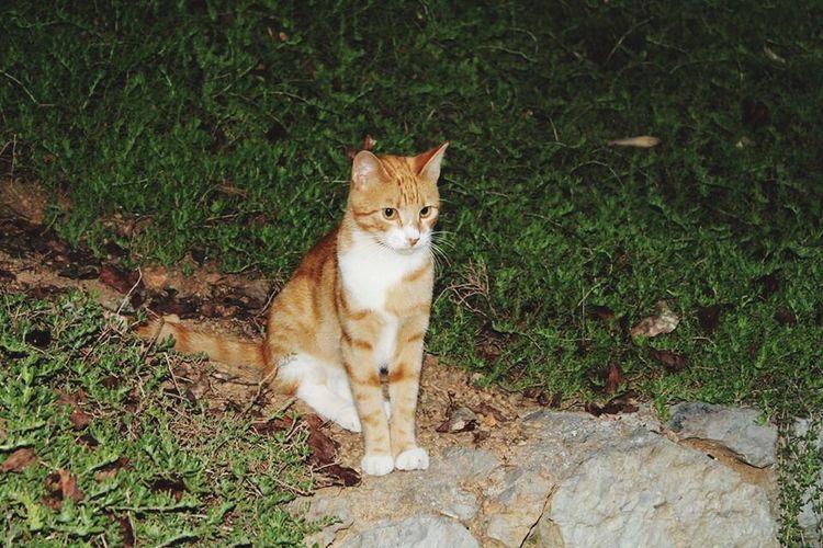 Likeforlike My Best Photo 2014 Güzel Cat Gözlerrr Kedi Aşkı Good Canon 1100D Istanbul Nice Day