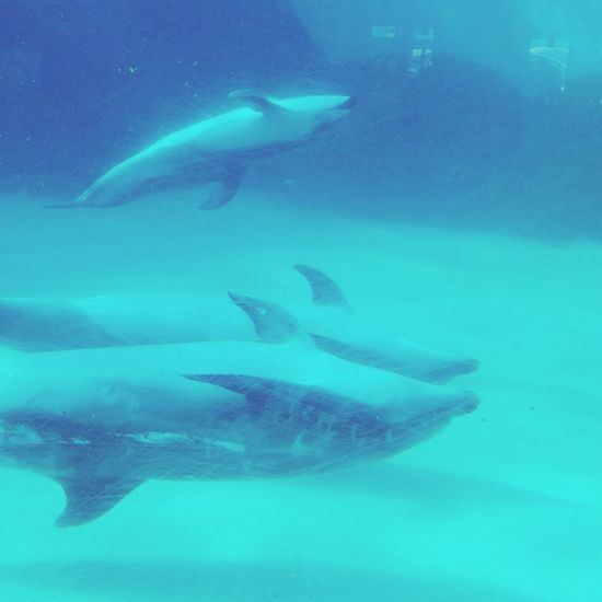 d Dolphins