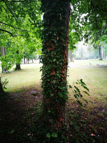 Regen Im Park Im Grünen Schlechtes Wetter