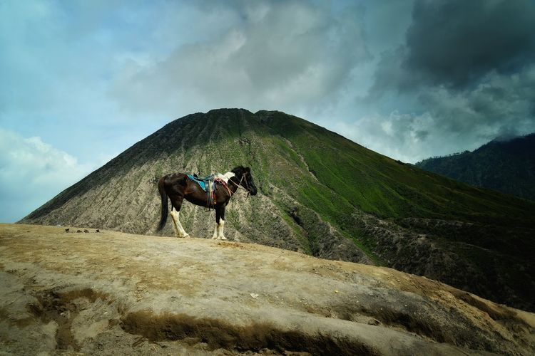 Man riding horse on mountain against sky